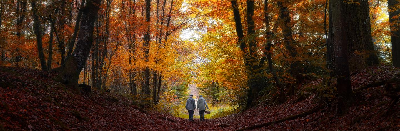Fontainbleau Forest In Autumn